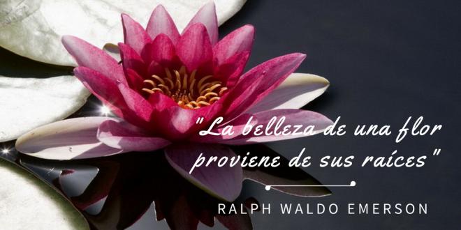 La belleza de una flor proviene de sus raices Ralph Waldo Emerson